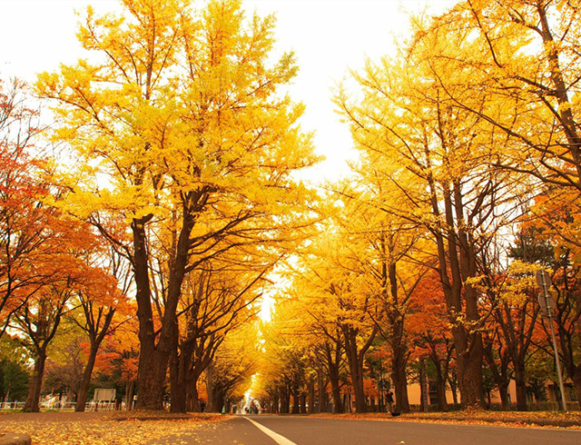 Recommended Autumn Leaf Spots by UU Hokkaido